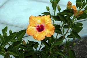 petalssm